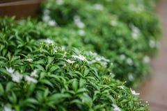 Закройте вверх по цветку в полдень в парке или саде с backgrou нерезкости стоковое фото