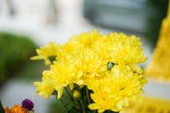 Закройте вверх по цветку в полдень в парке или саде с backgrou нерезкости стоковые фото