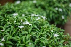 Закройте вверх по цветку в полдень в парке или саде с backgrou нерезкости стоковое изображение rf