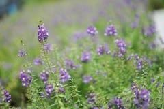 Закройте вверх по цветку в полдень в парке или саде с backgrou нерезкости стоковые изображения rf