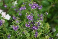Закройте вверх по цветку в полдень в парке или саде с backgrou нерезкости стоковые фотографии rf