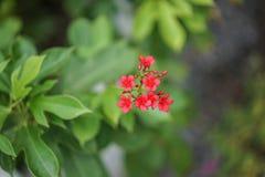 Закройте вверх по цветку в полдень в парке или саде с backgrou нерезкости стоковое фото rf