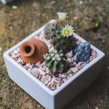 Закройте вверх по цветку кактуса succulents стоковые фото