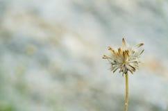 Закройте вверх по цветку травы Стоковое Изображение RF