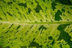 Закройте вверх по чувству зеленой предпосылки лист свежему в природе Стоковые Изображения RF
