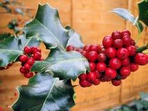 Закройте вверх по ягодам падуба Дизайн сцены рождества Стоковое фото RF