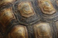 Закройте вверх по carapace черепахи стоковое изображение rf