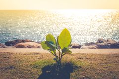 Закройте вверх по thriugh сиротливого малого зеленого дерева растущему от земли на побережье с красивым seascape Стоковая Фотография
