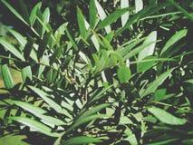 Закройте вверх пука листьев завода Стоковые Фотографии RF