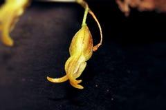 Закройте вверх различной и малой орхидеи стоковое изображение rf