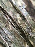 Закройте вверх расшивы дерева Стоковое фото RF
