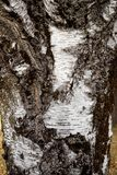 Закройте вверх расшивы на дереве Стоковое Фото