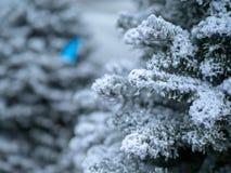 Закройте вверх рождественской елки предусматриванной в белых собираясь брызгах и порошке для взгляда снега стоковое изображение