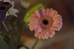 Закройте вверх розового цветка в расплывчатой предпосылке стоковые фотографии rf