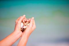 Закройте вверх рук держа разнообразие красивых seashells Стоковое фото RF
