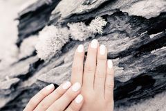 Закройте вверх рук женщины держа природный объект на деревянном backgro стоковая фотография rf