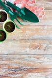 Закройте вверх саженцев и садовых инструментов Стоковое Изображение RF