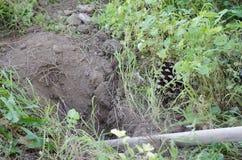 Закройте вверх сапки в одичалой земле травы Стоковые Фотографии RF