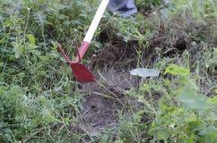 Закройте вверх сапки в одичалой земле травы Стоковое Фото