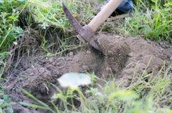 Закройте вверх сапки в одичалой земле травы Стоковые Изображения