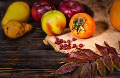 Закройте вверх сбора яблок, груши, рябины и тыкв лежа дальше Стоковая Фотография