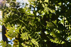 Закройте вверх свежих зеленых листьев загоренных солнечным светом стоковые фото