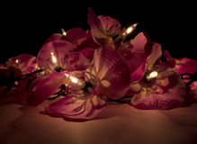 Закройте вверх светов красного цветка Fairy в темноте Стоковое фото RF