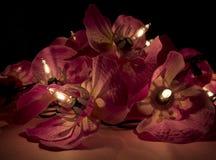 Закройте вверх светов красного цветка Fairy в темноте Стоковое Фото