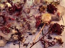 Закройте вверх семян цветков астры и старой бумажной предпосылки на деревянных планках стоковые фото
