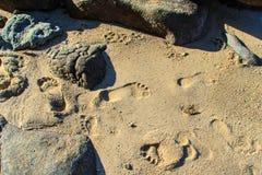 Закройте вверх следов ноги на пляже Стоковые Фото