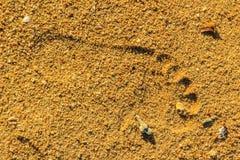 Закройте вверх следов ноги на пляже Стоковая Фотография RF
