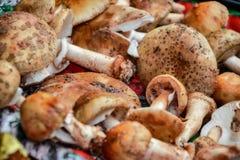 Закройте вверх смешанных грибов, подготовки для сушить Куча различных грибов разнообразий для супа Свежая сжатая в древесинах Стоковое Изображение RF