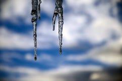 Закройте вверх сосулек на предпосылке голубого неба зимы стоковые изображения