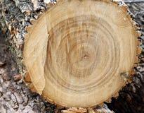 Закройте вверх спиленного дерева показывая кольца на деревянной поверхности Стоковые Изображения RF