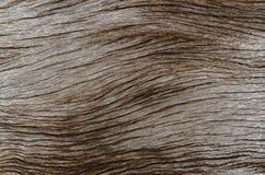 Закройте вверх старой деревянной текстуры Стоковое Изображение RF
