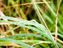 Закройте вверх стеклянного лезвия с водой росы падений дождя Стоковые Фото