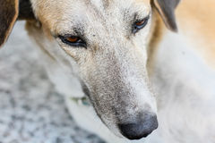 Закройте вверх, сторона собаки лежа на поле Стоковая Фотография