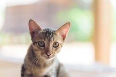 Закройте вверх стороны котенка Стоковое Изображение RF