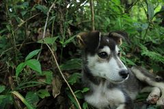 Закройте вверх стороны от черноты с белой и милой головой щенка с лесо стоковая фотография rf
