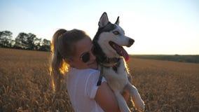 Закройте вверх счастливой девушки в солнечных очках обнимая и целуя ее собаку сибирской лайки среди колосков на луге женщина акции видеоматериалы