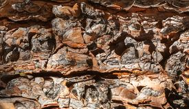 Закройте вверх текстуры елевой коры дерева стоковая фотография rf