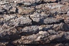 Закройте вверх текстуры расшивы засыхания журнала Scots сосны в солнце Стоковые Фотографии RF