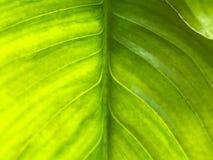 Закройте вверх тропической картины лист Стоковые Изображения