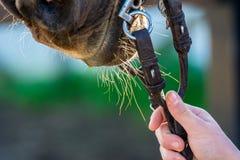 Закройте вверх уздечек лошади стоковая фотография rf