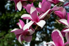 Закройте вверх цветений дерева весны Стоковые Фотографии RF