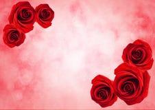Закройте вверх цветка красной розы с предпосылкой света bokeh Стоковое Фото