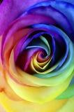 Закройте вверх цветка радуги розового Стоковые Фотографии RF