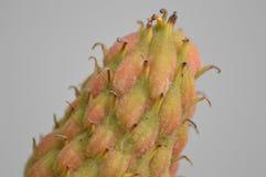 Закройте вверх цветкового растения Стоковые Фото