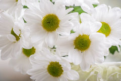 Закройте вверх цветков весны в корзине Стоковые Изображения RF