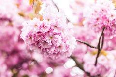 Закройте вверх, цветок Стоковые Изображения RF